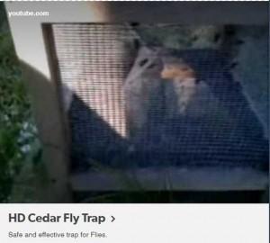 Cedar Flytrap